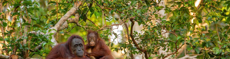 orangutan-3985939_1280